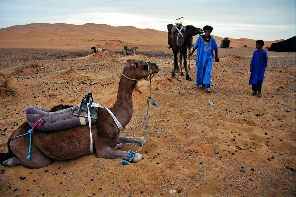 砂漠に向かってラクダを引く青年と子供