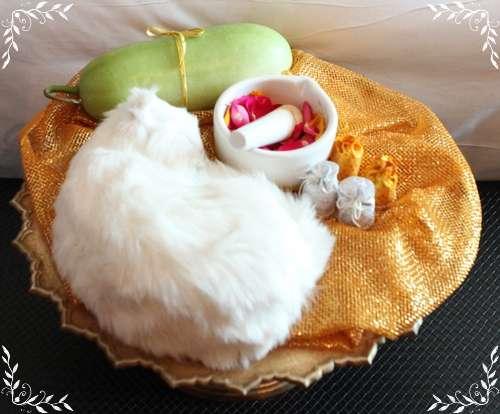 結婚の儀式の猫