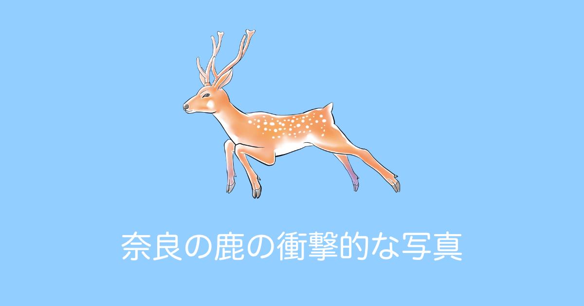 奈良の鹿の衝撃的な写真