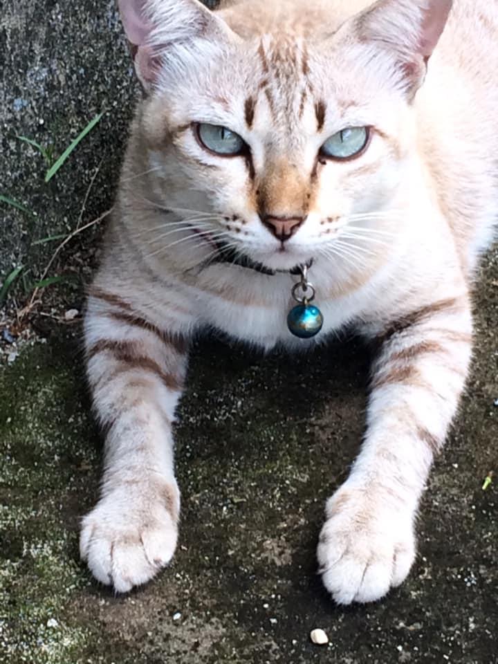 アンニュイな表情の猫