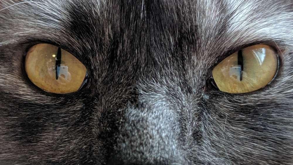 戦闘態勢の猫の目