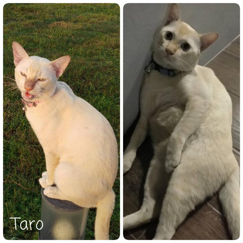 猫の表情の違い