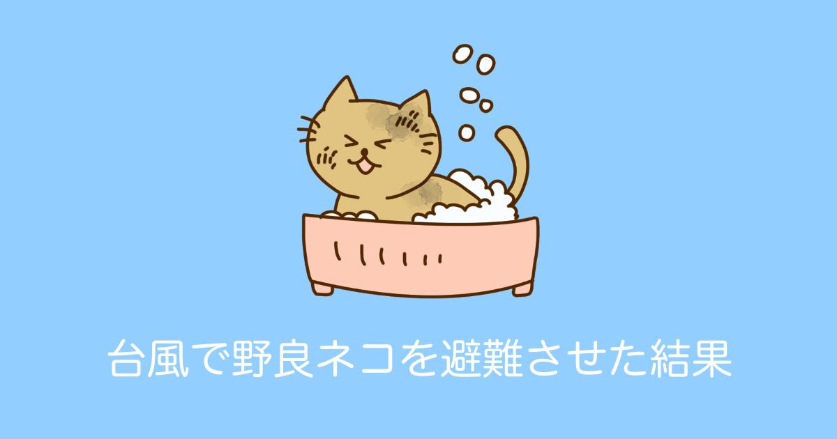 台風で野良ネコを避難させた結果