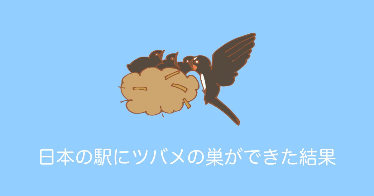 日本の駅にツバメの巣ができた結果