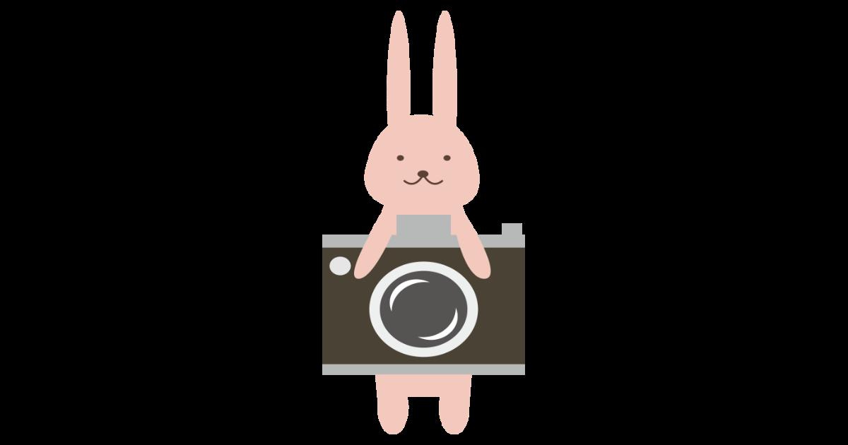 カメラうさぎ