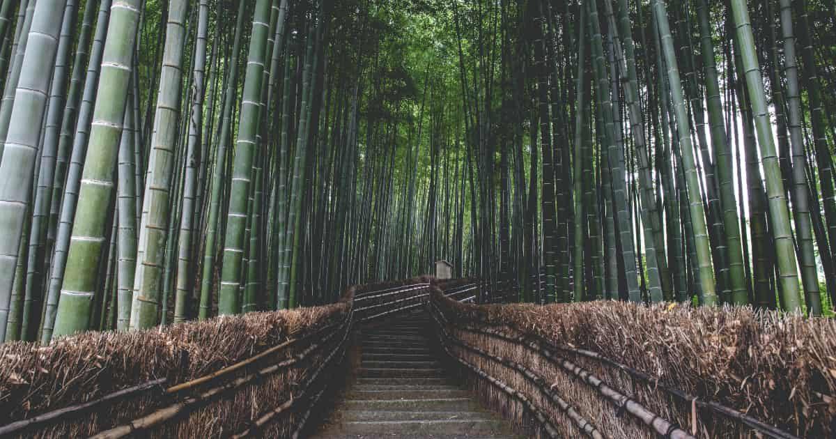 京都嵐山の竹林の道