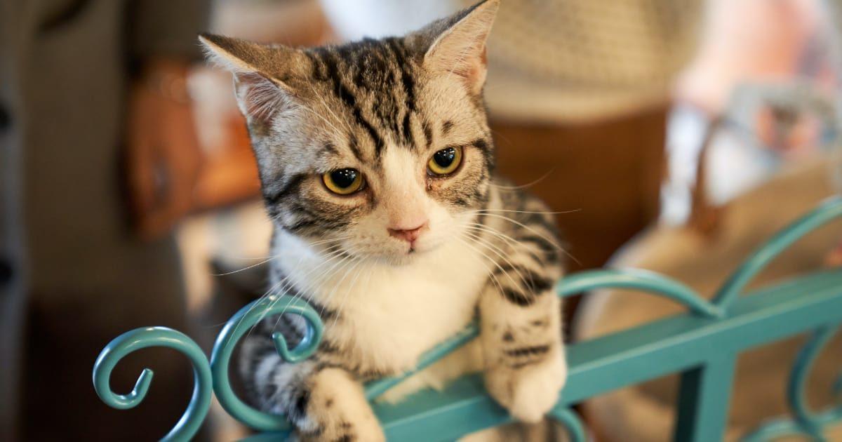 かまってほしそうなネコ