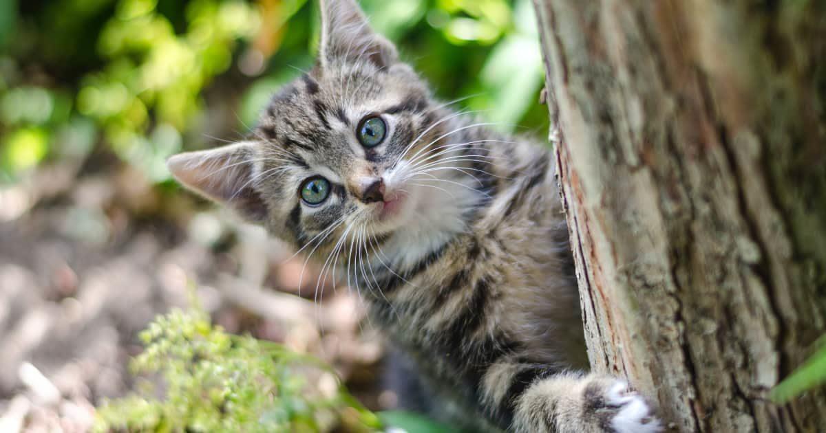 こっちを覗いてるネコ