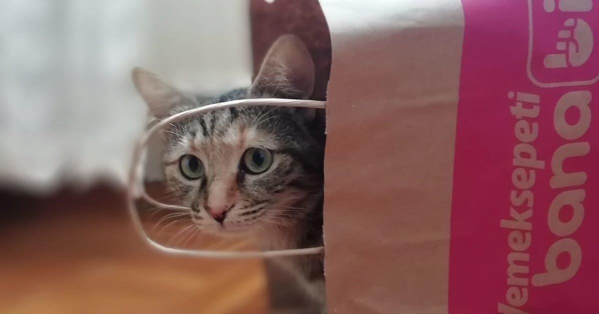 紙袋から顔を出すネコ