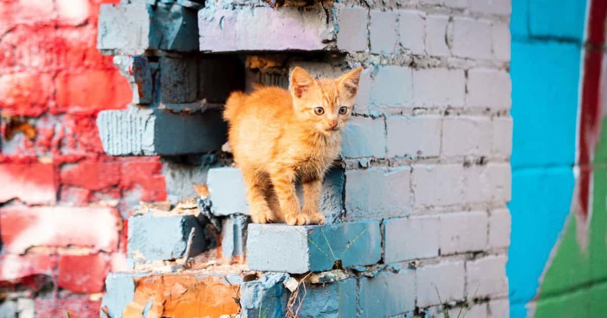 壁にいるネコ