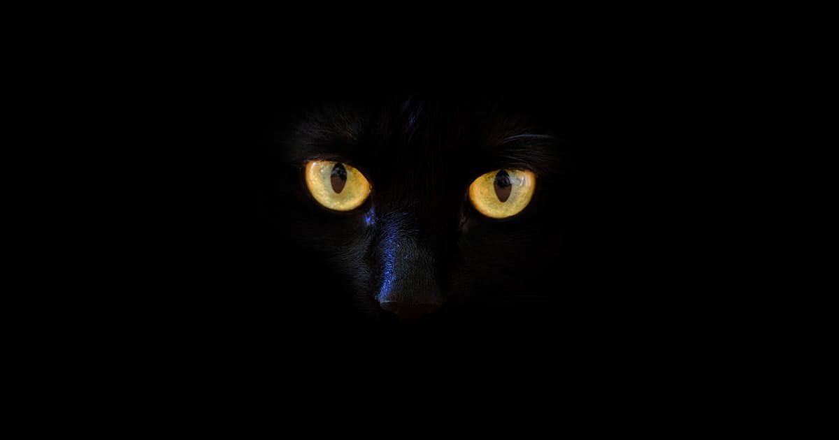 闇にいる黒猫(クロネコ)