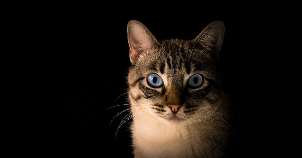 こちらを見つめるネコ