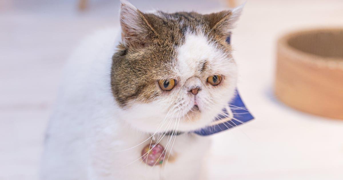 顔をしかめるネコの写真、失敗