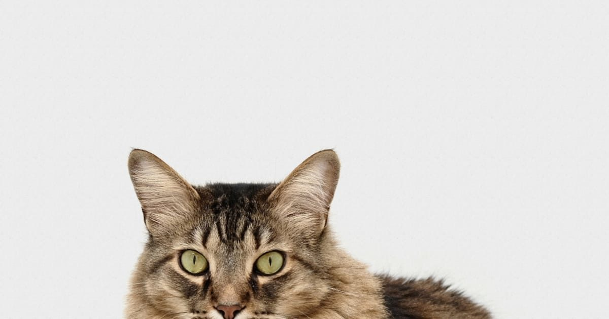 可愛いネコちゃんの写真