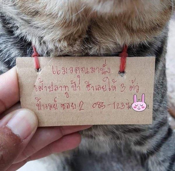 แมวคุณมานั่งเฝ้าปลาทูป้า ป้าเลยให้ไป 3 ตัว ป้าเมย์ ซอย 2 085-1237-xxx