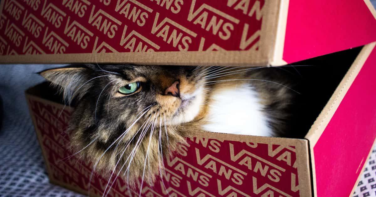 箱に入っているネコ