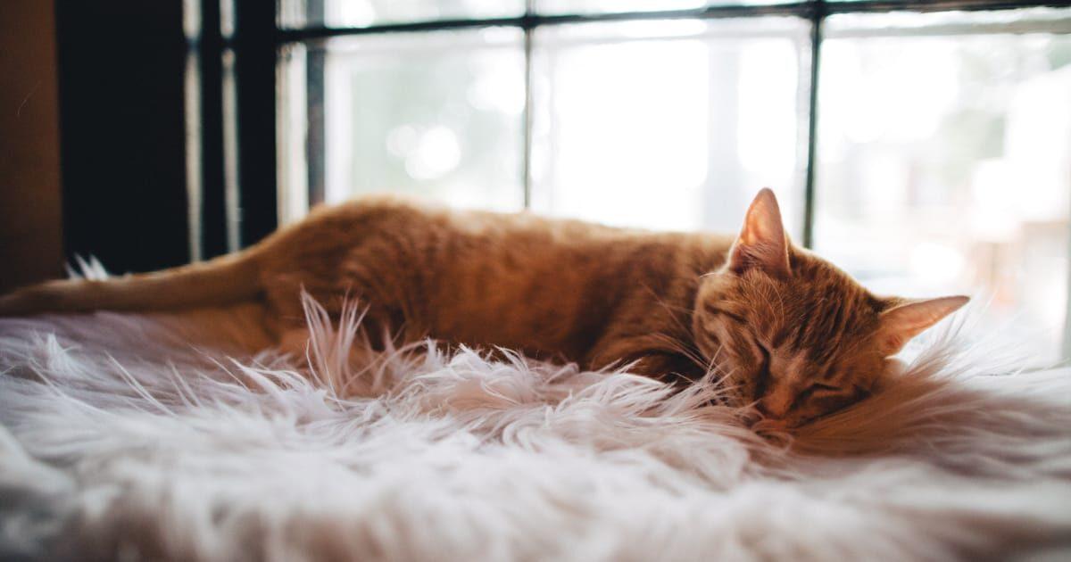 ふわふわマットで寝るネコ