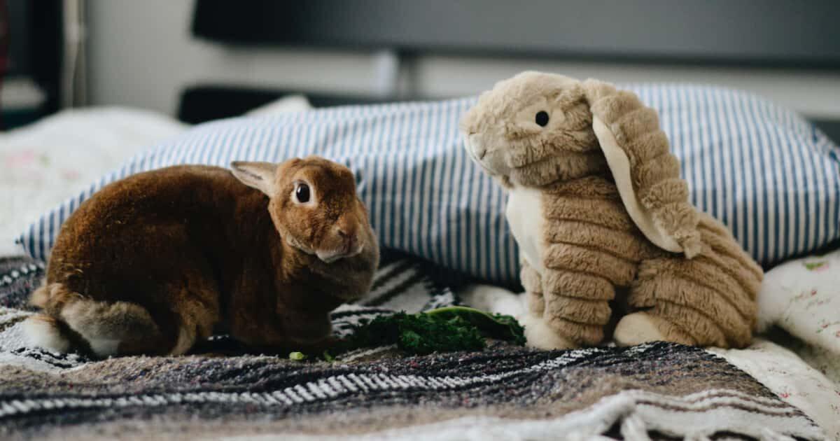 ウサギとウサギのぬいぐるみ