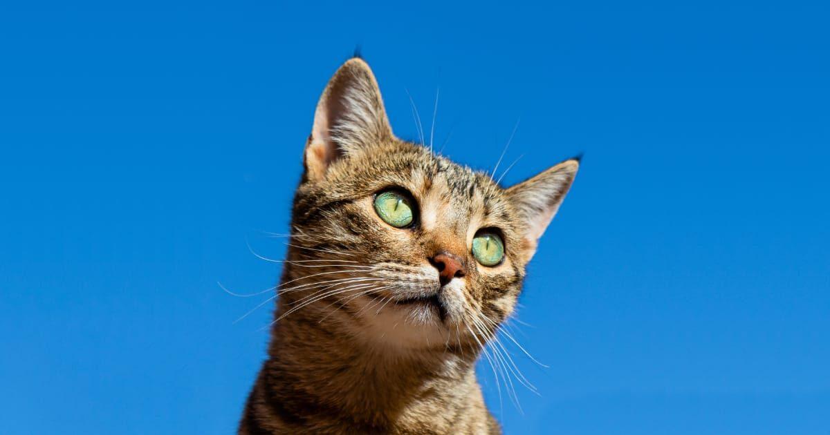 ネコと青い空