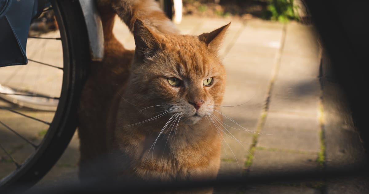やさぐれた野良猫