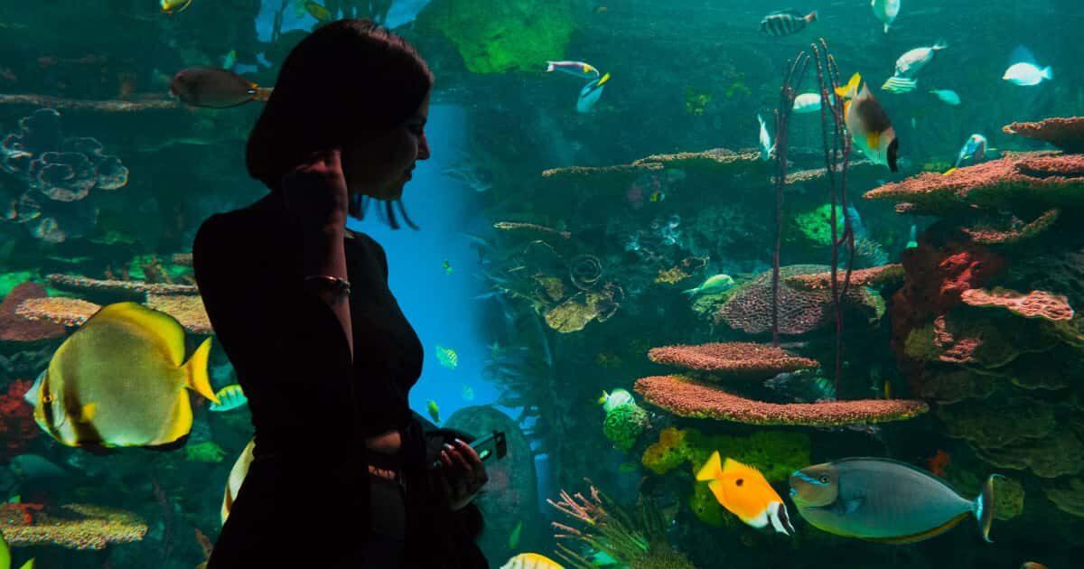 水族館にいる外国人美女