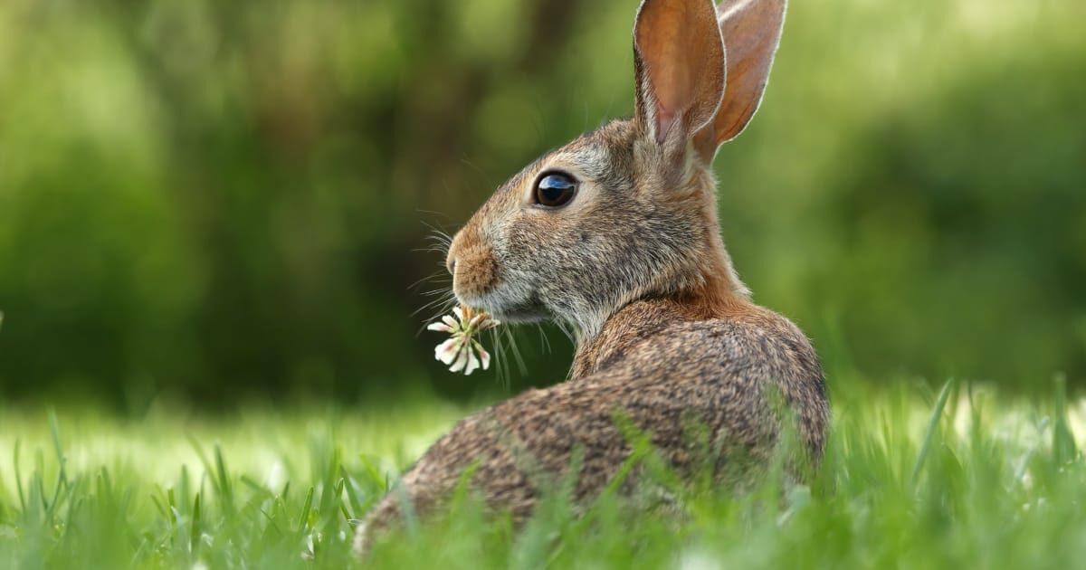 お花を食べてるウサギ